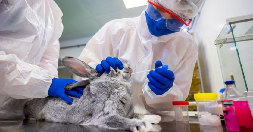 Russia Registers World's First Covid -19 Vaccine For Animals