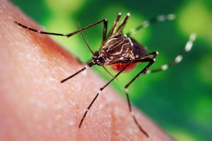 why-do-mosquitoes-drink-human-blood-know-the-scientific-reason
