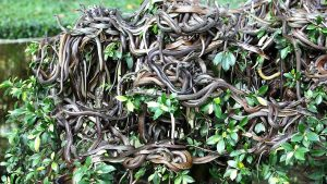 the-story-of-an-island-full-of-snakes-from-where-it-is-very-difficult-to-return-alive