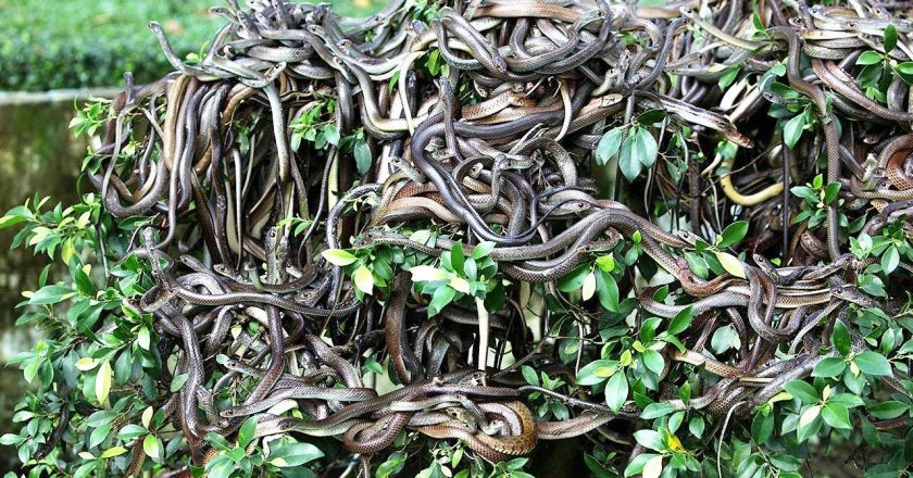 The Story of an Island Full of Snakes: From Where it is very difficult to Return Alive